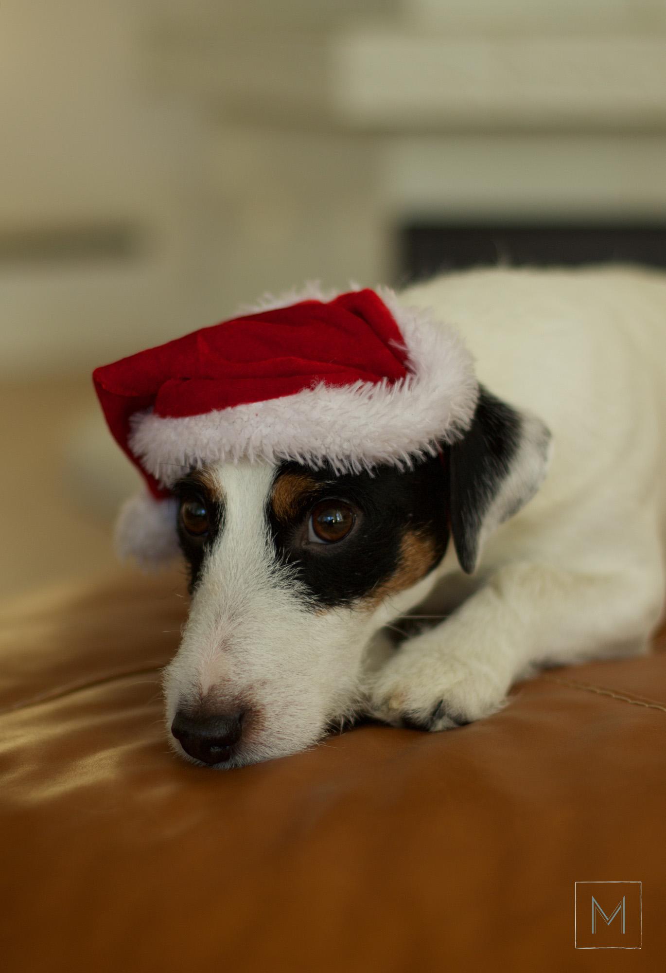 joulukalenteri8