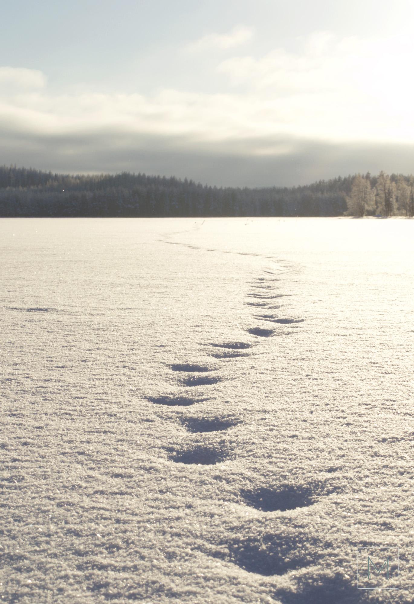 talvea11