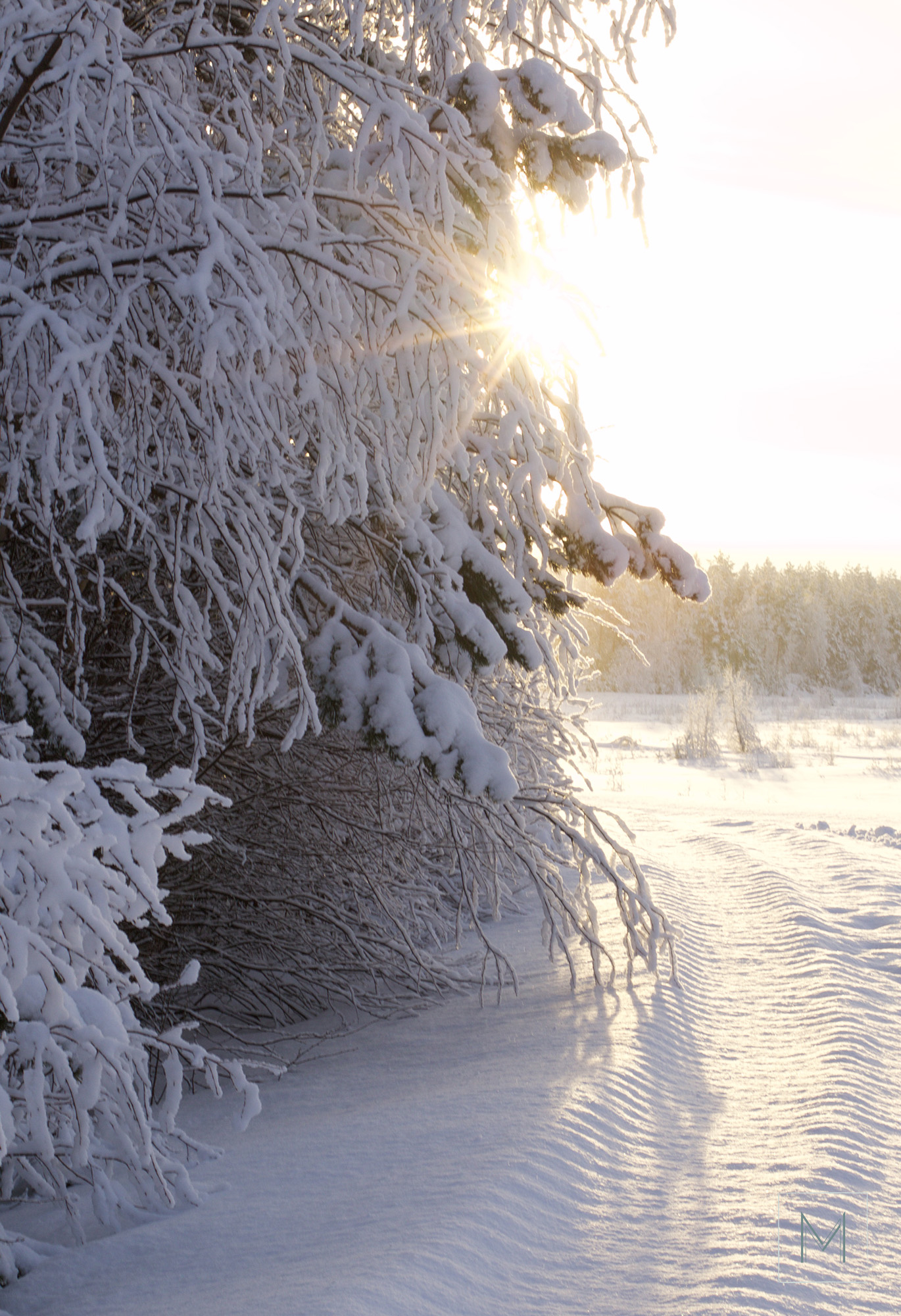 talvea13
