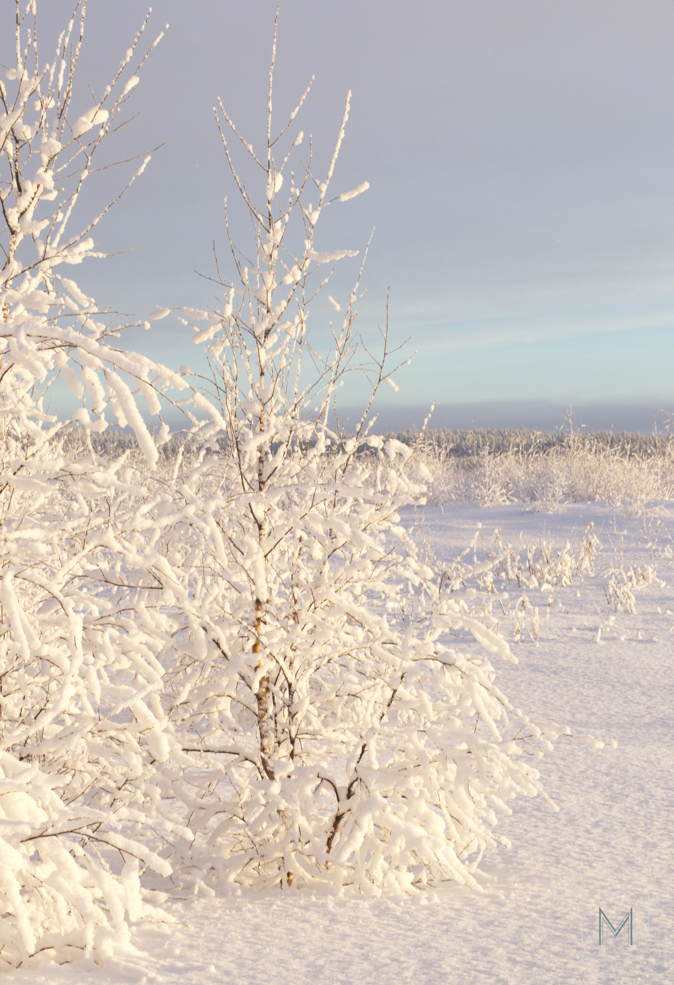 talvea2