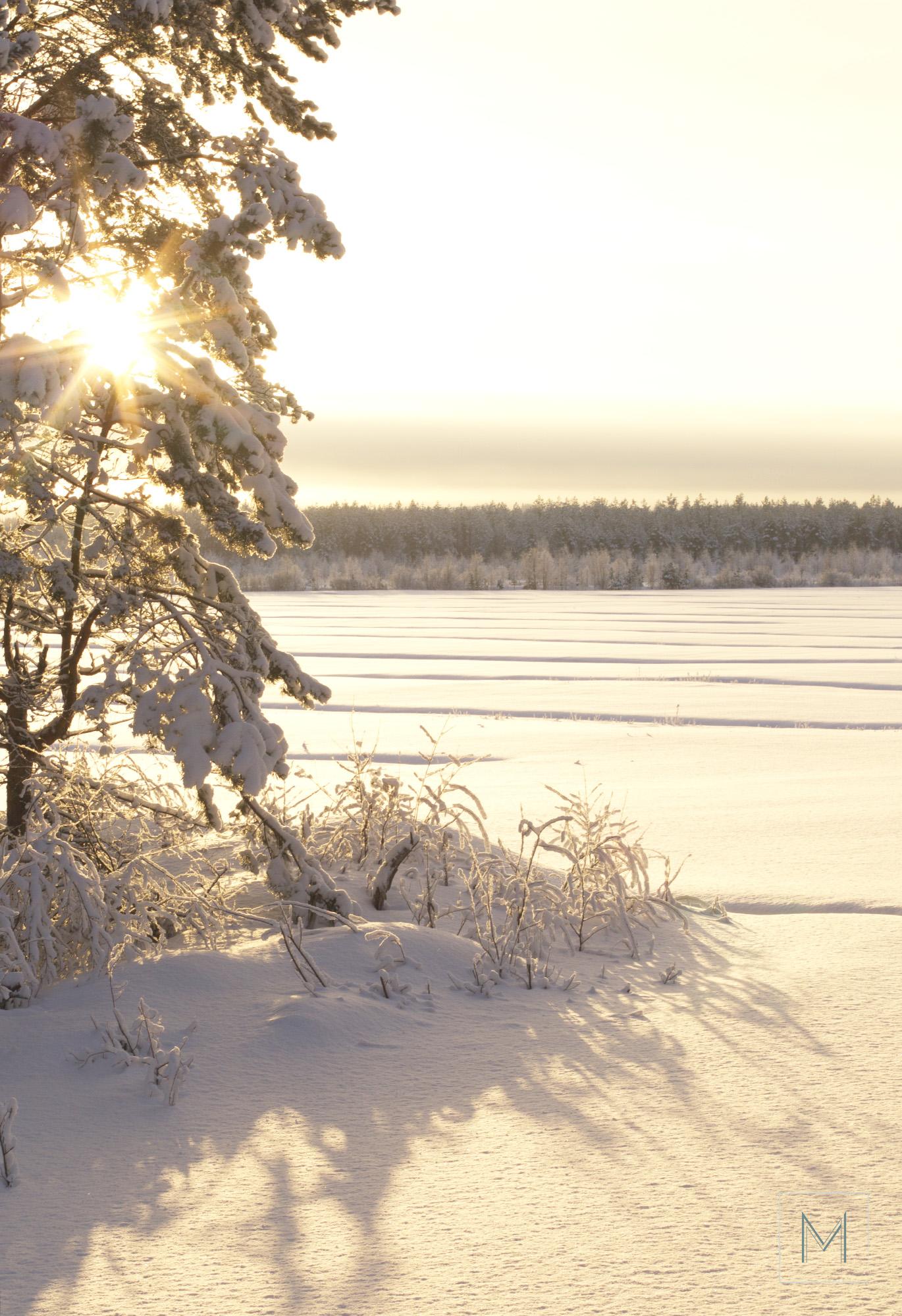 talvea6
