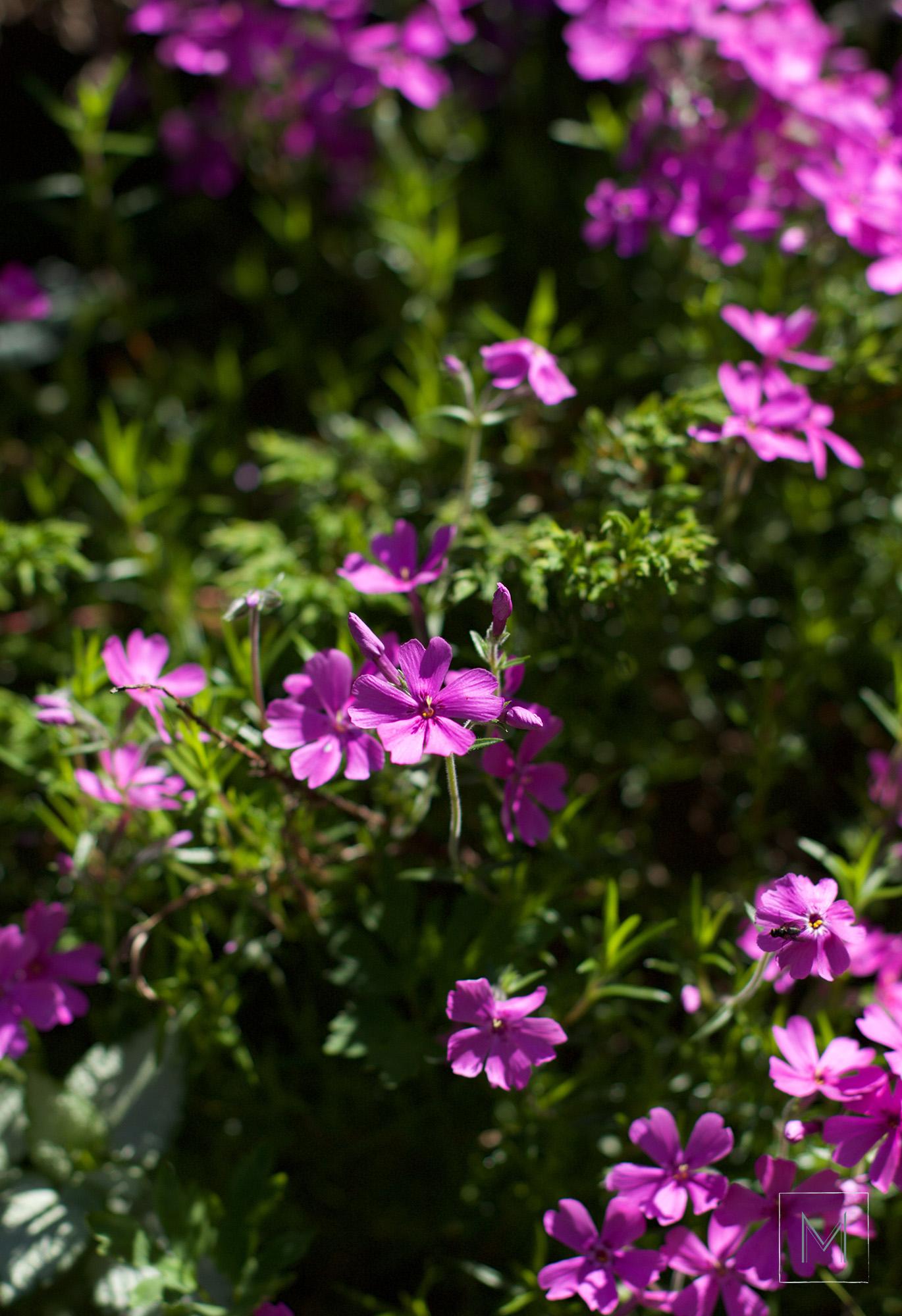 puutarhankukintoa