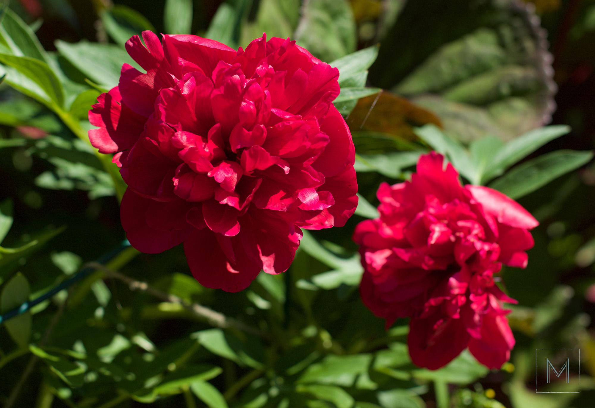 puutarhankukintoa3